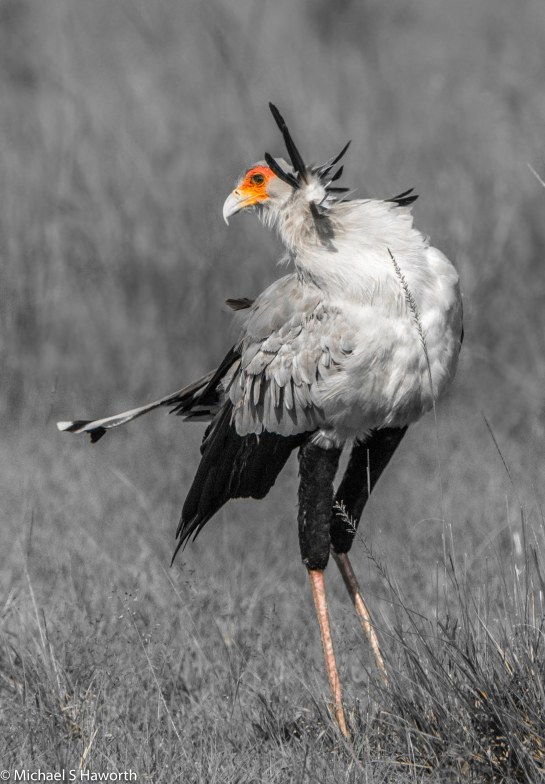 Photographic safari in Masai Mara,Kenya -----------------Shooting data--------------------------- 1/1/3200, f14, iso800, 850mm