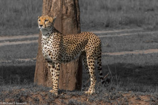 Photographic safari in Masai Mara,Kenya -----------------Shooting data--------------------------- 1/1/800, f18, iso800, 400mm