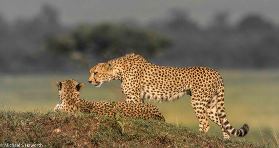 Mashatu,Botswana -----------------Shooting data--------------------------- 1/1/4000, f9, iso640, 850mm