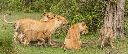 Photographic safari in Masai Mara,Kenya -----------------Shooting data--------------------------- 1/1/1000, f8, iso640, 230mm